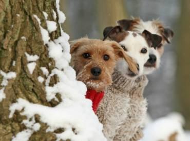 Αστείες φωτογραφίες σκύλων που φόρεσαν τα χειμωνιάτικα