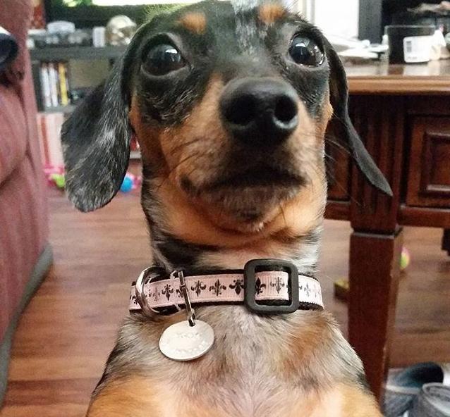Woofland - Αστείες φωτογραφίες σκύλων που περιμένουν λιχουδιά - Γουφαμάρες 2
