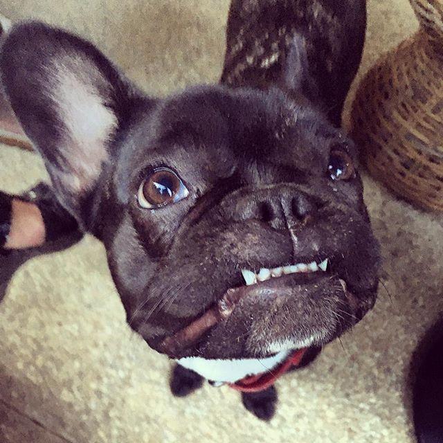 Woofland  -Αστείες φωτογραφίες σκύλων που περιμένουν λιχουδιά - Γουφαμάρες 8