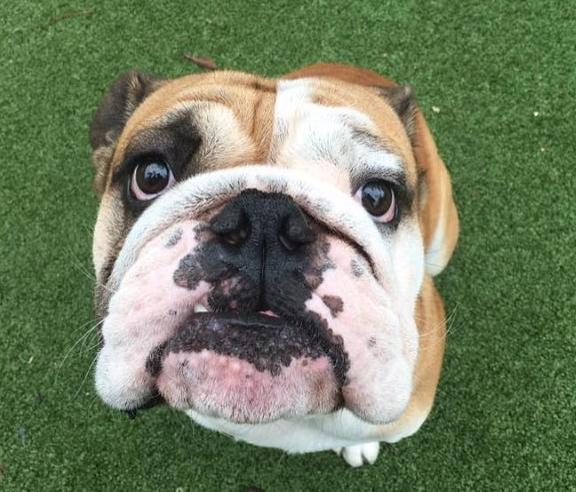 Woofland  -Αστείες φωτογραφίες σκύλων που περιμένουν λιχουδιά - Γουφαμάρες 9