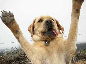 Woofland Αστείες φωτογραφίες σκύλων που περιμένουν λιχουδιά