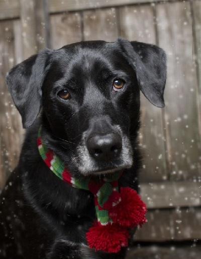 Woofland - Αστείες φωτογραφίες σκύλων που φορούν Χριστουγεννιάτικα