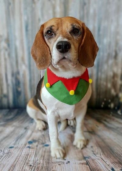 Woofland - Αστείες φωτογραφίες σκύλων που φορούν Χριστουγεννιάτικα 5