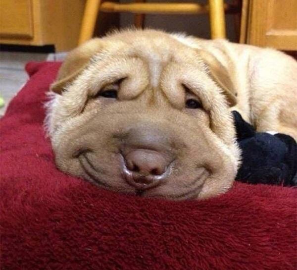 Woofland - Αστείες φωτογραφίες σκύλων που χαμογελούν - Γουφαμάρες