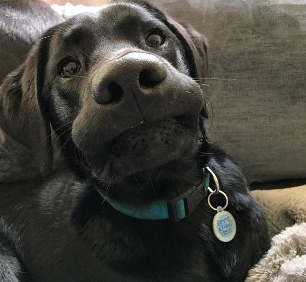 Woofland - Αστείες φωτογραφίες σκύλων που χαμογελούν - Γουφαμάρες 3