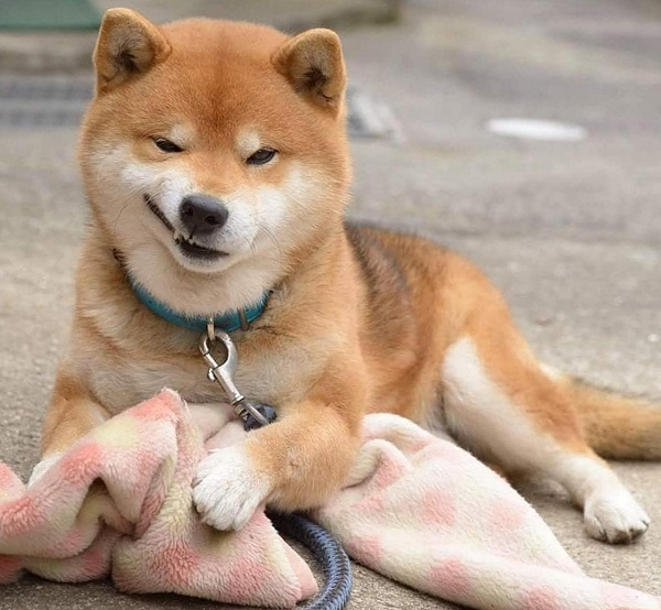Woofland - Αστείες φωτογραφίες σκύλων που χαμογελούν - Γουφαμάρες 4