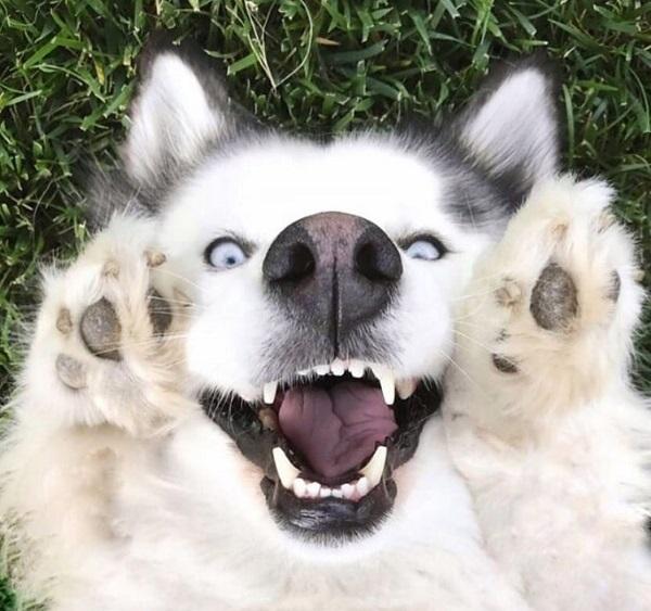 Woofland - Αστείες φωτογραφίες σκύλων που χαμογελούν - Γουφαμάρες 5