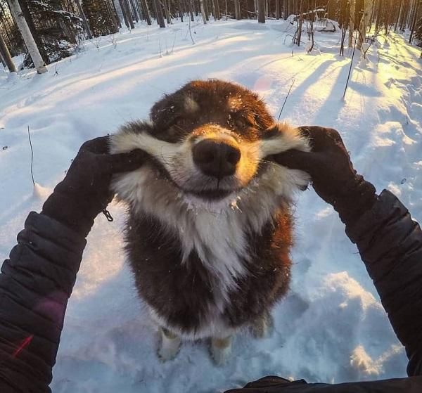 Woofland - Αστείες φωτογραφίες σκύλων που χαμογελούν - Γουφαμάρες 6