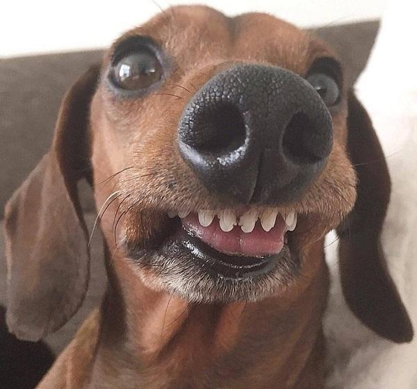 Woofland - Αστείες φωτογραφίες σκύλων που χαμογελούν - Γουφαμάρες 8