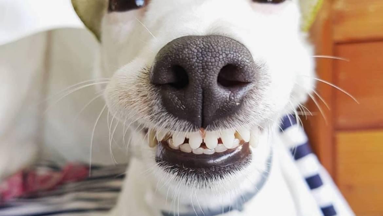 Αστείες φωτογραφίες σκύλων που χαμογελούν – Γουφαμάρες