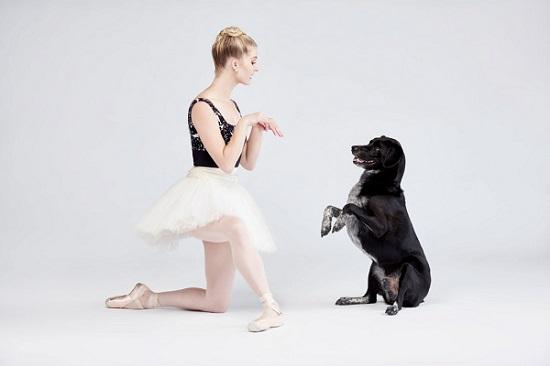 Woofland - Αστείες φωτογραφίες σκύλων που χορεύουν - Γουφαμάρες 4