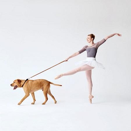 Woofland - Αστείες φωτογραφίες σκύλων που χορεύουν - Γουφαμάρες 6