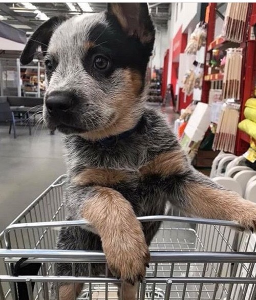 Woofland - Αστείες φωτογραφίες σκύλων που ψωνίζουν - Γουφαμάρες 3