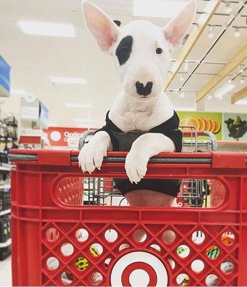 Woofland - Αστείες φωτογραφίες σκύλων που ψωνίζουν - Γουφαμάρες 5