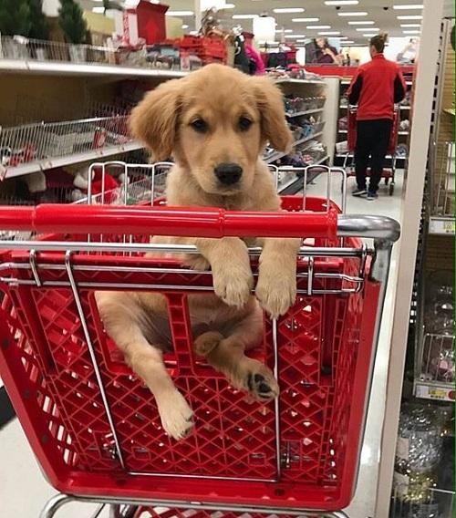 Woofland - Αστείες φωτογραφίες σκύλων που ψωνίζουν - Γουφαμάρες 6
