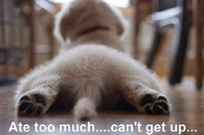 Woofland – Αστείες φωτογραφίες σκύλων που έφαγαν πολύ