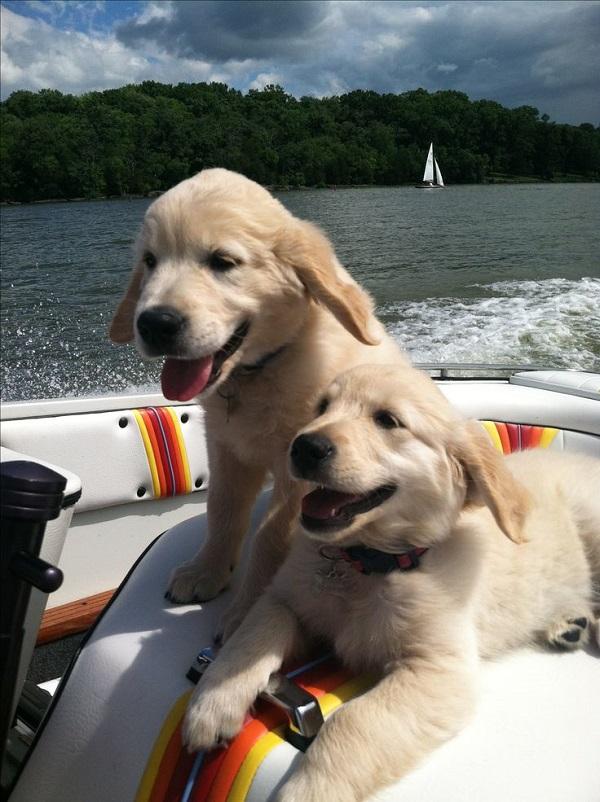Woofland - Αστείες φωτογραφίες σκύλων σε βάρκα - Γουφαμάρες 1