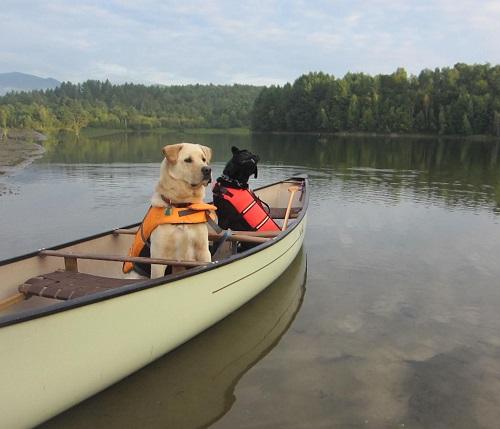Woofland - Αστείες φωτογραφίες σκύλων σε βάρκα - Γουφαμάρες 10