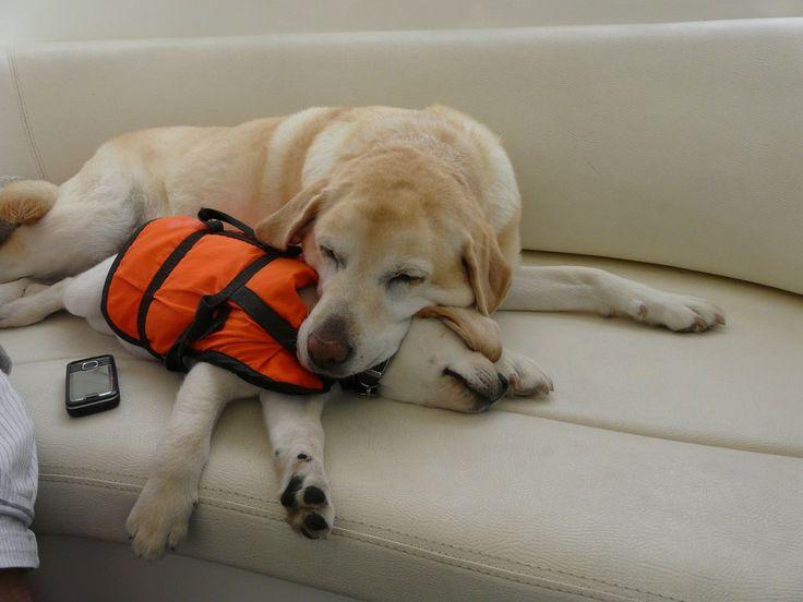 Woofland - Αστείες φωτογραφίες σκύλων σε βάρκα - Γουφαμάρες 3