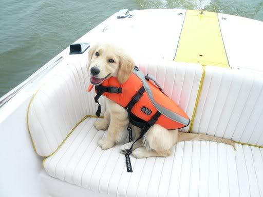 Woofland - Αστείες φωτογραφίες σκύλων σε βάρκα - Γουφαμάρες 6