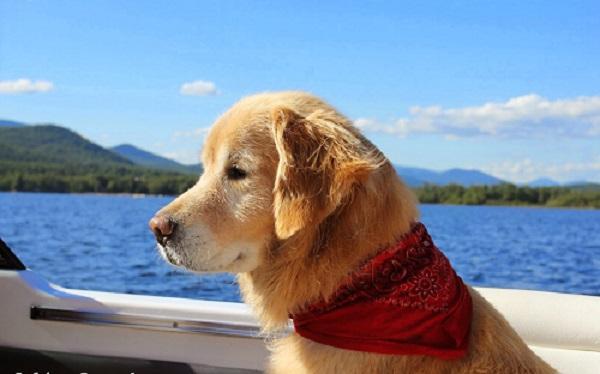 Αστείες φωτογραφίες σκύλων σε βάρκα – Γουφαμάρες
