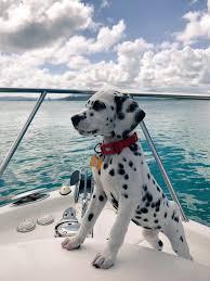 Woofland - Αστείες φωτογραφίες σκύλων σε βάρκα - Γουφαμάρες 9