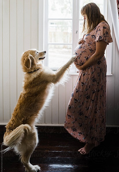 Woofland - Αστείες φωτογραφίες σκύλων στην εγκυμοσύνη - Γουφαμάρες 3