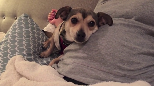 Woofland - Αστείες φωτογραφίες σκύλων στην εγκυμοσύνη - Γουφαμάρες 4
