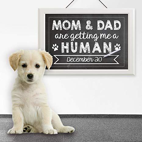 Woofland - Αστείες φωτογραφίες σκύλων στην εγκυμοσύνη - Γουφαμάρες 6