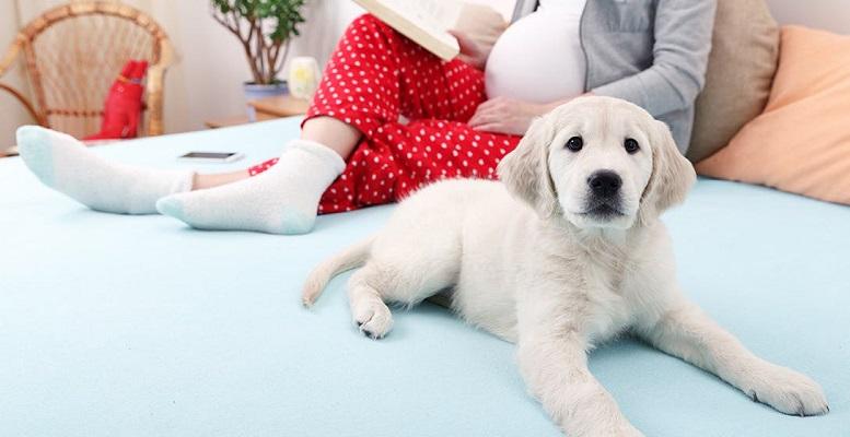 Woofland - Αστείες φωτογραφίες σκύλων στην εγκυμοσύνη - Γουφαμάρες 7