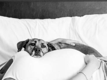 Αστείες φωτογραφίες σκύλων και εγκυμοσύνη