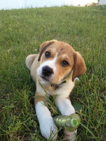 Woofland - Αστείες φωτογραφίες σκύλων στην εξοχή - Γουφαμάρες 10