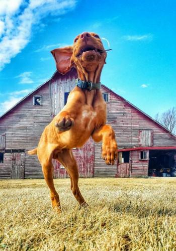 Woofland - Αστείες φωτογραφίες σκύλων στην εξοχή - Γουφαμάρες 2