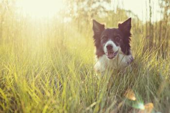 Woofland - Αστείες φωτογραφίες σκύλων στην εξοχή - Γουφαμάρες 3