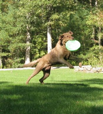 Woofland - Αστείες φωτογραφίες σκύλων στην εξοχή - Γουφαμάρες 4