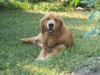 Woofland - Αστείες φωτογραφίες σκύλων στην εξοχή - Γουφαμάρες 5