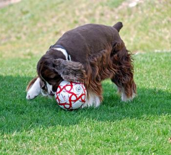 Woofland - Αστείες φωτογραφίες σκύλων στην εξοχή - Γουφαμάρες 6