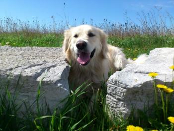 Woofland - Αστείες φωτογραφίες σκύλων στην εξοχή - Γουφαμάρες 8