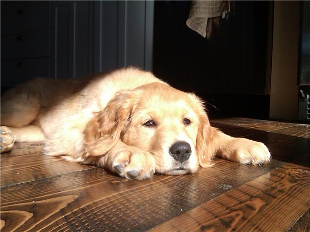 Woofland - Αστείες φωτογραφίες σκύλων στον ήλιο - Γουφαμάρες 1