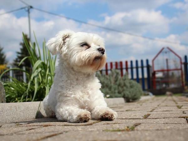 Woofland - Αστείες φωτογραφίες σκύλων στον ήλιο - Γουφαμάρες 3