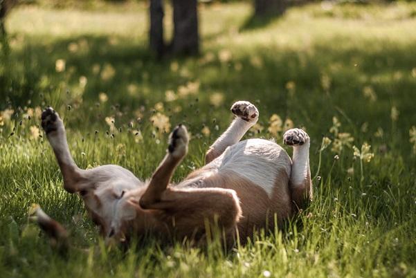 Woofland - Αστείες φωτογραφίες σκύλων στον ήλιο - Γουφαμάρες 5