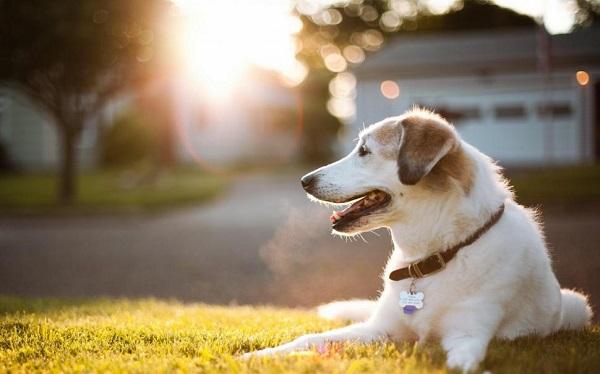 Woofland - Αστείες φωτογραφίες σκύλων στον ήλιο - Γουφαμάρες 6