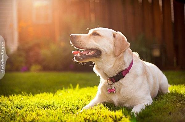 Woofland - Αστείες φωτογραφίες σκύλων στον ήλιο - Γουφαμάρες 7