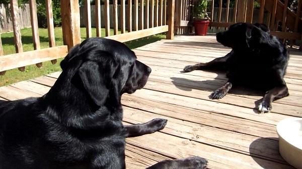 Woofland - Αστείες φωτογραφίες σκύλων στον ήλιο - Γουφαμάρες 8