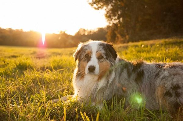Αστείες φωτογραφίες σκύλων στον ήλιο – Γουφαμάρες