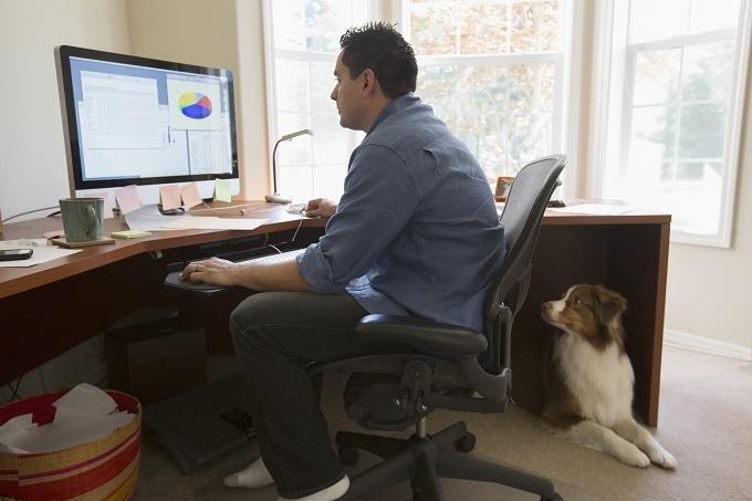Woofland - Αστείες φωτογραφίες σκύλων στο γραφείο - Γουφαμάρες 2