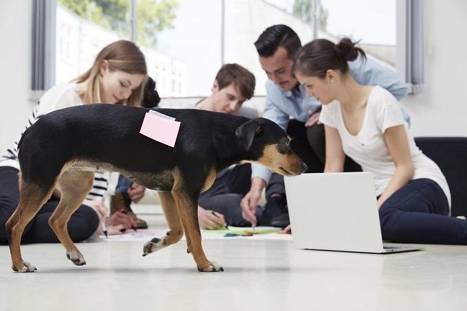 Αστείες φωτογραφίες σκύλων στο γραφείο Γουφαμάρες – Woofland