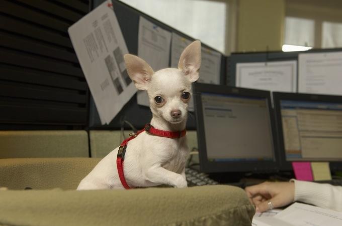 Woofland - Αστείες φωτογραφίες σκύλων στο γραφείο - Γουφαμάρες 4
