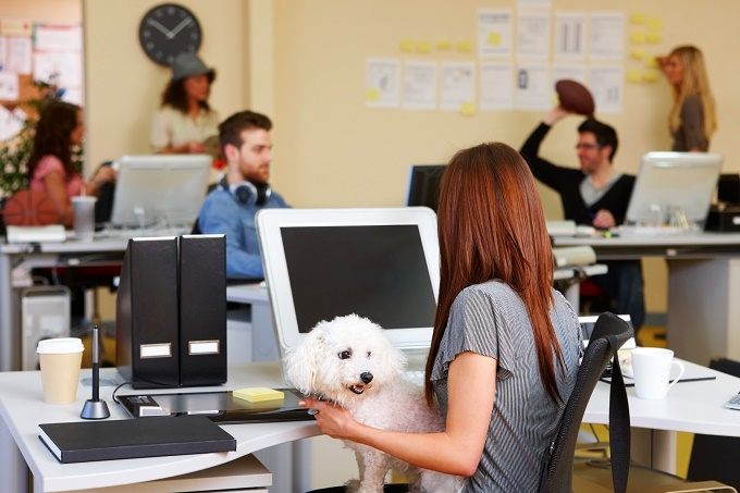 Woofland - Αστείες φωτογραφίες σκύλων στο γραφείο - Γουφαμάρες 6