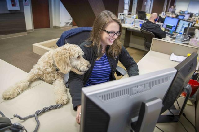 Woofland - Αστείες φωτογραφίες σκύλων στο γραφείο - Γουφαμάρες 9